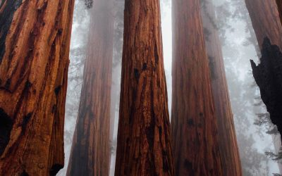 The Best Destinations to See California's Redwood Giants
